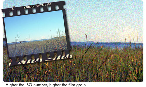 Higher the ISO number, the more grain you'll see when you scan your negative film